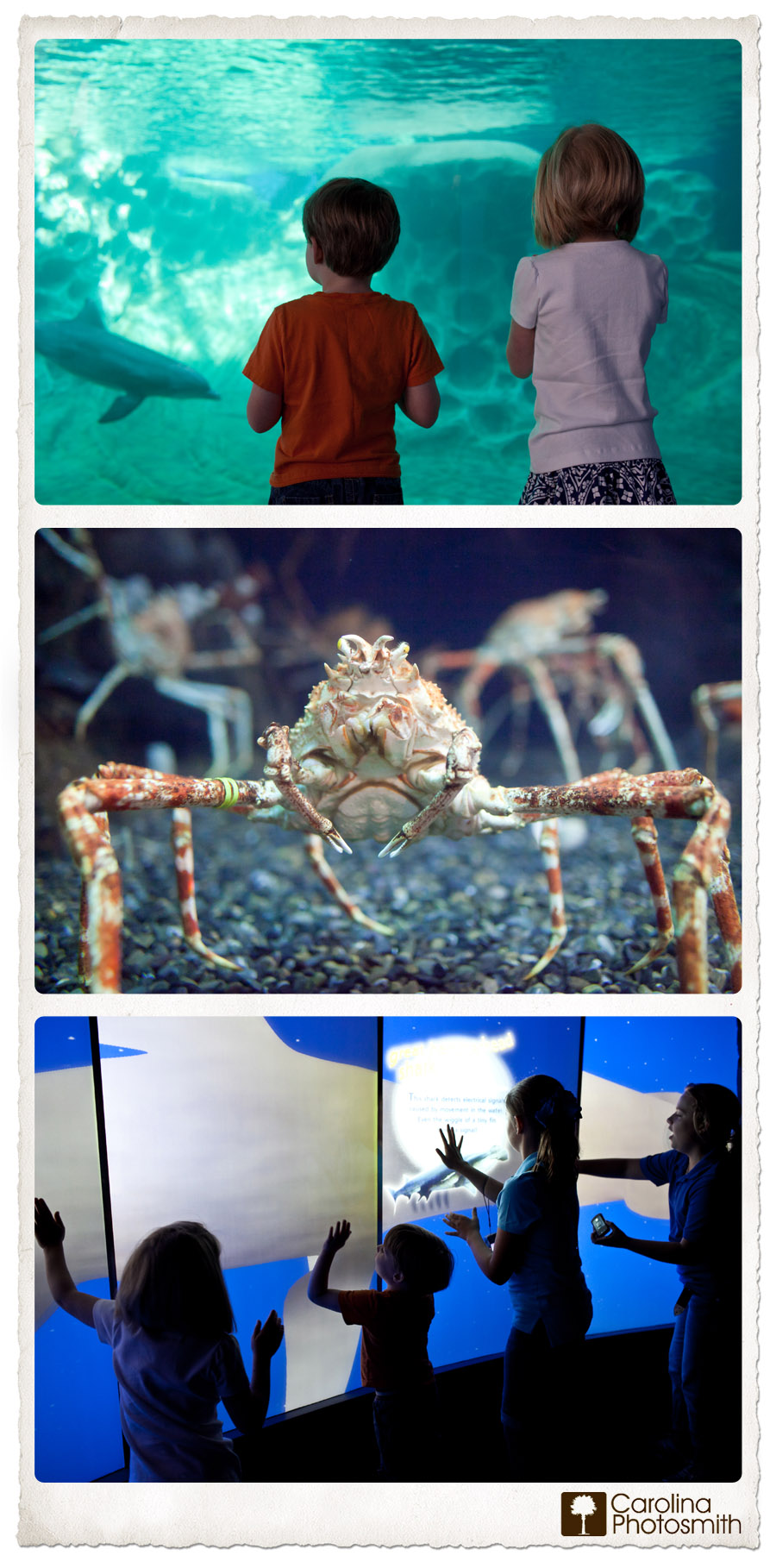 My Children Were Enthralled with Georgia Aquarium's Dolphins, Japanese Spider Crabs and Interactive Exhibits