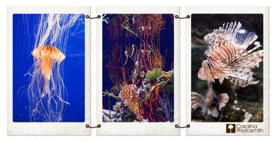 Georgia Aquarium Spring Break Field Trip Carolina