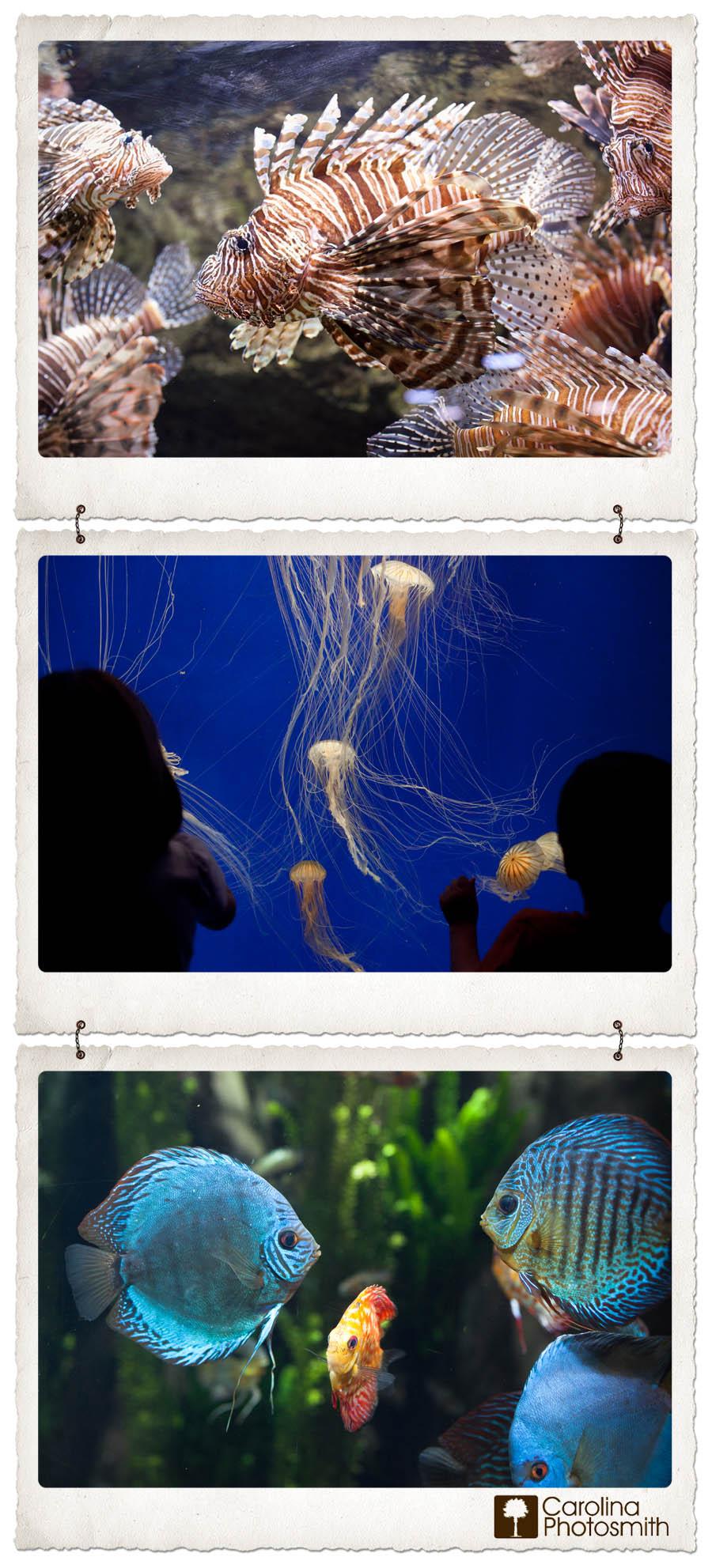 Colorful Amazonian Fish, Mesmerizing Jellies at the Georgia Aquarium