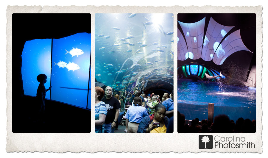 Georgia Aquarium and New Dolphin Tales Show Wow the Crowds