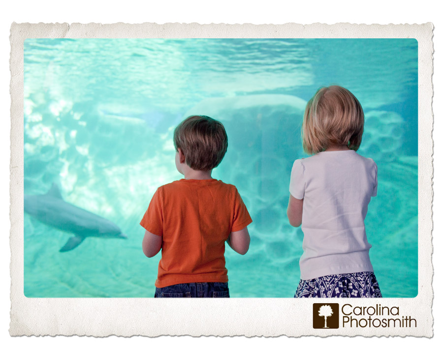 Faceless Friday - Through the Looking Glass - my kids mesmerized by a dolphin at the Georgia Aquarium