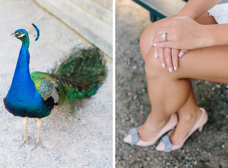 Magnolia Plantation peacock and some fab pink pumps for engagement photos by Carolina Photosmith