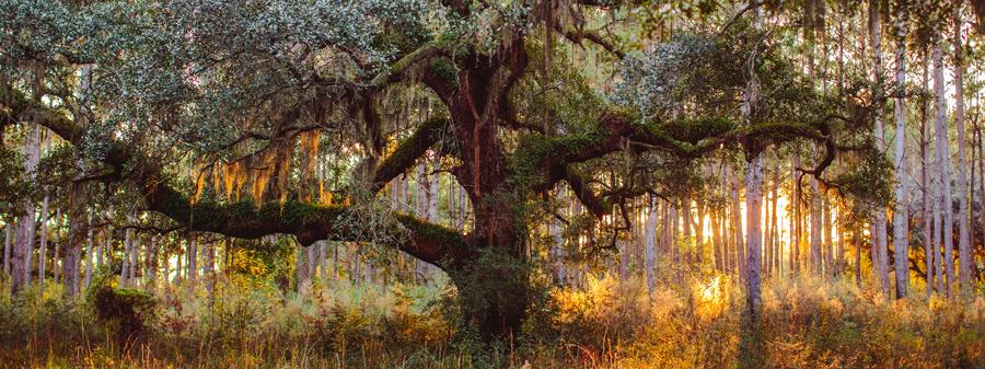 Time to expand the family tree. Engagement photography on Wadmalaw Island near Charleston. ©Carolina Photosmith