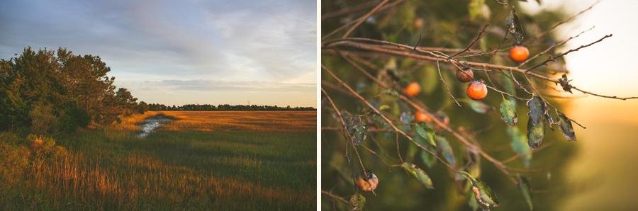 274-Charleston-lifestyle-family-photography-marsh-pasture-trees-