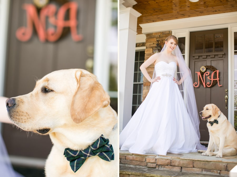 Celebrate your furry friends on National Dog Day. Charleston pho